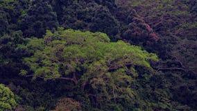 Vogelperspektive eines tropischen Waldes stockfotografie
