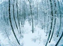 Vogelperspektive eines Waldes am Winter Stockfoto