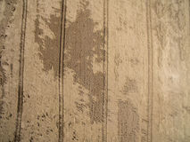 Vogelperspektive eines Weizenfeldes gebrochen durch den letzten Regen mit einem Gewitter Zerstörung von Getreideernten Stockfotografie