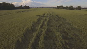 Vogelperspektive: Fliegen über grünes Feld stock video footage
