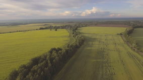Vogelperspektive: Fliegen über grünes Feld stock footage