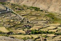 Vogelperspektive grünes ladakh landwirtschaftlicher Landschaft Stockbild