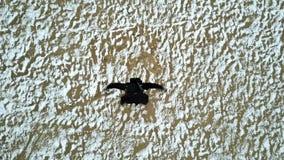 Vogelperspektive: Junger Mann tanzt auf den Strand stock footage