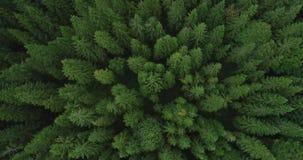 Vogelperspektive 4k des gezierten Baumwaldes im Spätsommer - Umwelt begrifflich stock footage