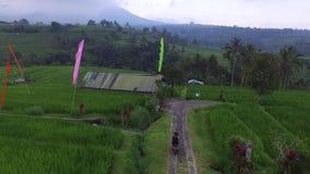 Vogelperspektive: Leute sind auf Reisfeldern in Bali stock video