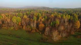 Vogelperspektive-Straße im Koniferenwald auf dem Baikalsee, Burjatien, Russland stock footage