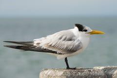 Vogelperspektive Tampas, Florida Lizenzfreies Stockbild