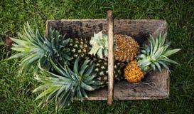 Vogelperspektive von Ananas im hölzernen Korb Lizenzfreie Stockfotos