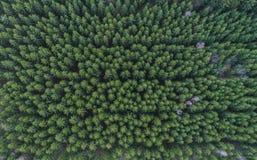 Vogelperspektive von ausgerichteten grünen Nadelbaum Treetops im Wald, Deutschland stockfotografie