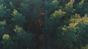 Vogelperspektive von Autofahrten im Koniferenwald stock video