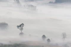 Vogelperspektive von Bäumen im Morgennebel Stockfotografie