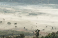 Vogelperspektive von Bäumen im Morgennebel Stockbild