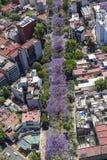 Vogelperspektive von blühenden Jacarandabäumen in Mexiko City Stockfoto
