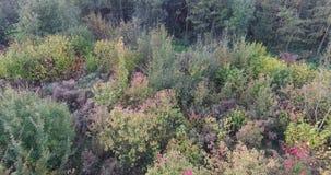 Vogelperspektive von bunten B?umen des Herbstes im Park, die Niederlande stock video footage