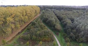 Vogelperspektive von bunten B?umen des Herbstes im Park, die Niederlande stock footage