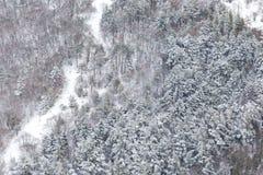 Vogelperspektive von den Bäumen bedeckt durch Schnee in einem Wald, auf der Seite Subasio-Berges Umbrien, eine Art Zusammenfassun Lizenzfreie Stockbilder
