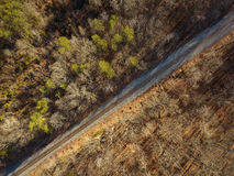 Vogelperspektive von den Bahngleisen, die durch Wald laufen lizenzfreies stockfoto