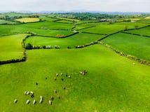 Vogelperspektive von endlosen üppigen Weiden und von Ackerland von Irland Schöne irische Landschaft mit Smaragdgrünfeldern und -w Stockfotos