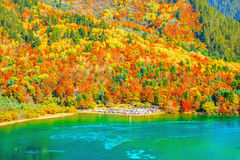 Vogelperspektive von fünf Flower See zur Herbstsonnenaufgangzeit Lizenzfreie Stockfotos