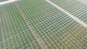 Vogelperspektive von Gewächshäusern mit Gemüse stock video