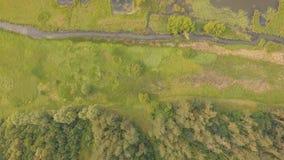 Vogelperspektive von von grünen Bäumen, Fluss und Landstraßen des Sommers lizenzfreies stockfoto