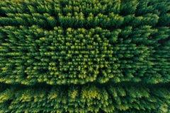 Vogelperspektive von grünen Koniferenwaldplantagen lizenzfreie stockfotos