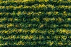 Vogelperspektive von grünen Laubwaldplantagen stockbilder