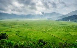 Vogelperspektive von grünen Lingko-Spinnen-Netz-Reis-Feldern mit Sonnenlicht-Durchdringen durch Wolken zum Feld mit dem Regnen Fl stockbilder