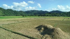 Vogelperspektive von grünen Rechteckreisfeldern auf Sonnenuntergang Tropische Landschaftsreisfelder, Berge, Palmen bewirtschaften stock footage