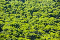 Vogelperspektive von grünen Treetops Lizenzfreie Stockfotos