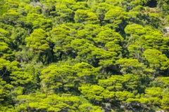 Vogelperspektive von grünen Treetops Stockfotografie