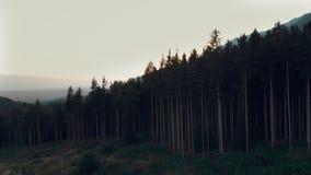 Vogelperspektive von großen Bäumen - Fichten, die in Richtung zum Sonnenaufgang gehen - Sonnenuntergang stock video