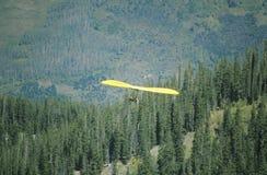 Vogelperspektive von Hang Glider in der mittleren Luft während Hang Gliding Festivals, Tellurid, Colorado mit Wald unten Stockfotografie