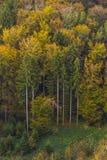 Vogelperspektive von Herbstbäumen Stockbilder