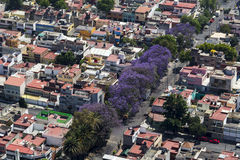 Vogelperspektive von Jacarandabäumen Lizenzfreies Stockfoto