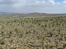 Vogelperspektive von Joshua Tree National Park Kalifornien, USA stockfotografie