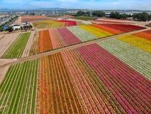 Vogelperspektive von Karlsbad-Blumen-Feldern stockfotografie