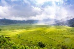 Vogelperspektive von Lingko-Spinnen-Netz-Reis-Feldern während Sonnenlicht-Durchdringen durch Wolken zum Feld lizenzfreie stockfotos