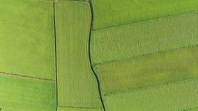 Vogelperspektive von Paddy Field von Dongshan-Gemeinde, Yilan, Taiwan stock video footage