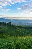 Vogelperspektive von Plantagen des grünen Tees und von Shizuoka-Stadt Stockfoto