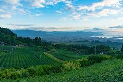 Vogelperspektive von Plantagen des grünen Tees und von Shizuoka-Stadt Stockfotos