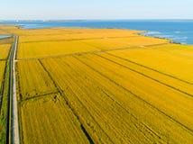 Vogelperspektive von Reis-Feldern Stockbild