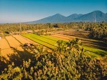 Vogelperspektive von Reisfeldern in Bali-Insel, Indonesien stockbild