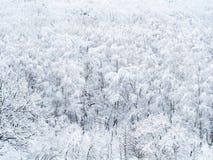 Vogelperspektive von schneebedeckten Bäumen im Wald stockfotografie