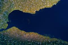 Vogelperspektive von Waldsee Stockfoto