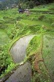 Vogelperspektive von weltberühmten Reisterrassen, Banaue Lizenzfreies Stockbild