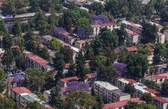 Vogelperspektive von Wohnblock- und Jacarandabäumen Lizenzfreie Stockfotos