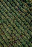 Vogelperspektiveavocadoplantage von Michoacan Mexiko lizenzfreie stockfotos