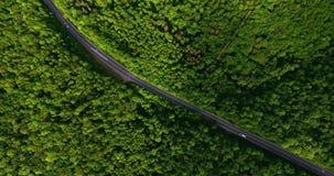 Vogelperspektivefliegen über Straße mit dem bewegenden Auto, das durch das Weggrünwaldautofahren entlang den Waldweg ANTENNE: Aut stock video