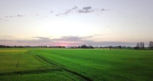 Vogelperspektiveflug über den Reisfeldern stock video footage